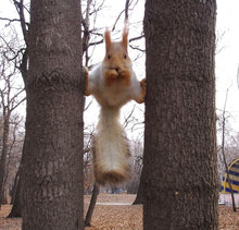 Squirrel Between Two Trees